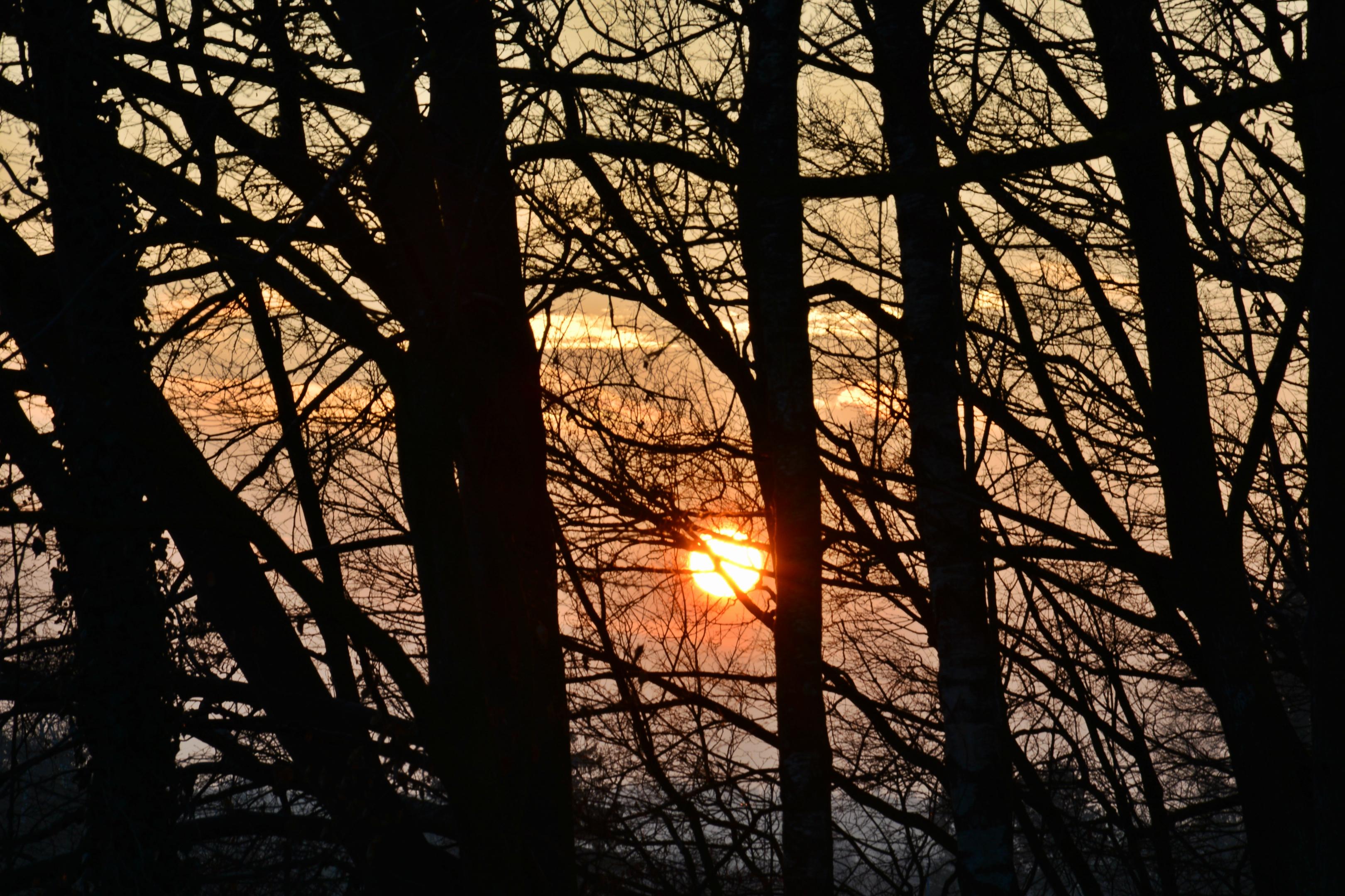 W0345 Sonnenuntergang im Wald.jpg