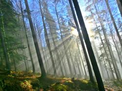 H0002 Nebelspiel