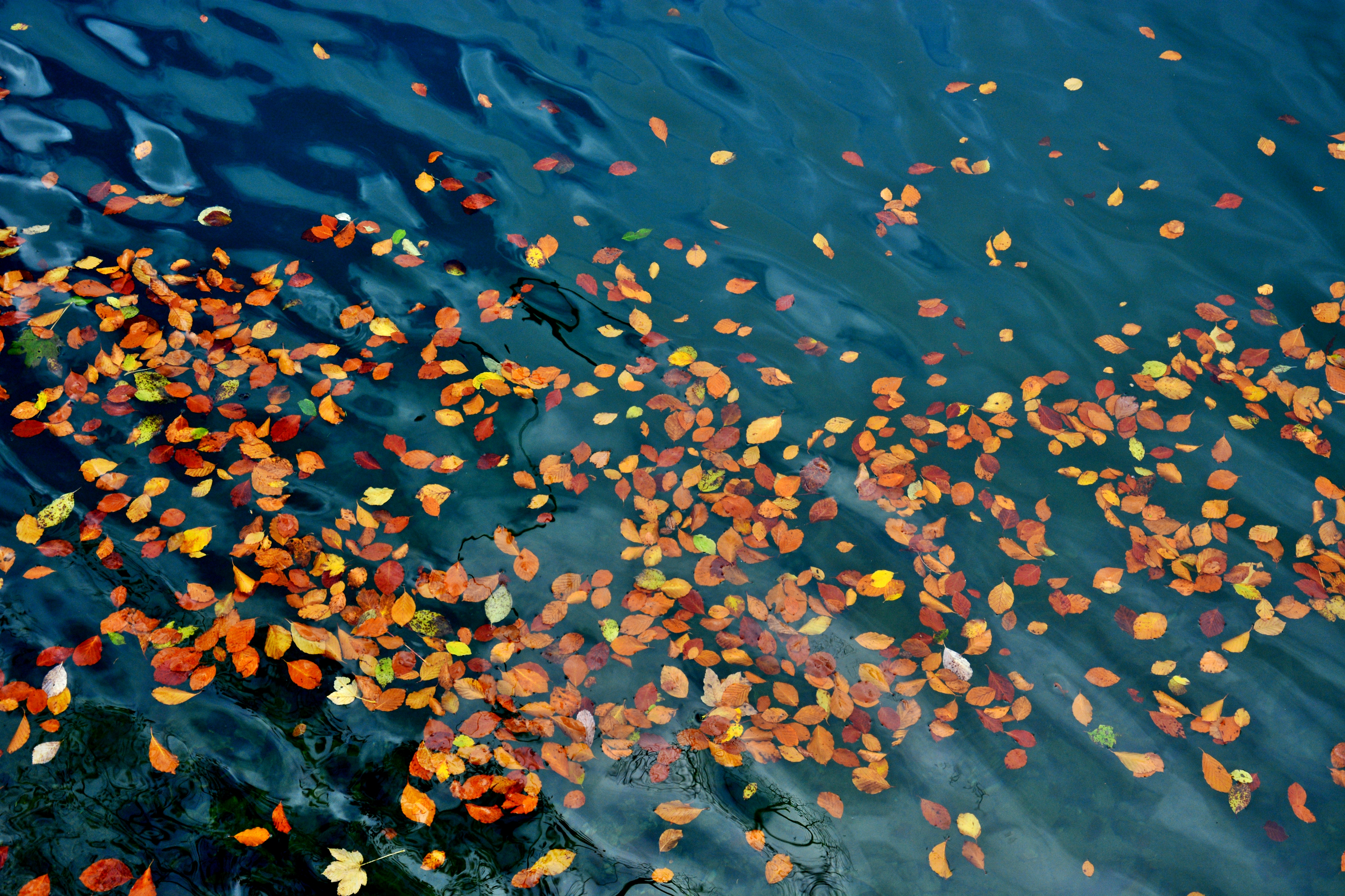 G0406 Herbstlaub im Alatsee.jpg