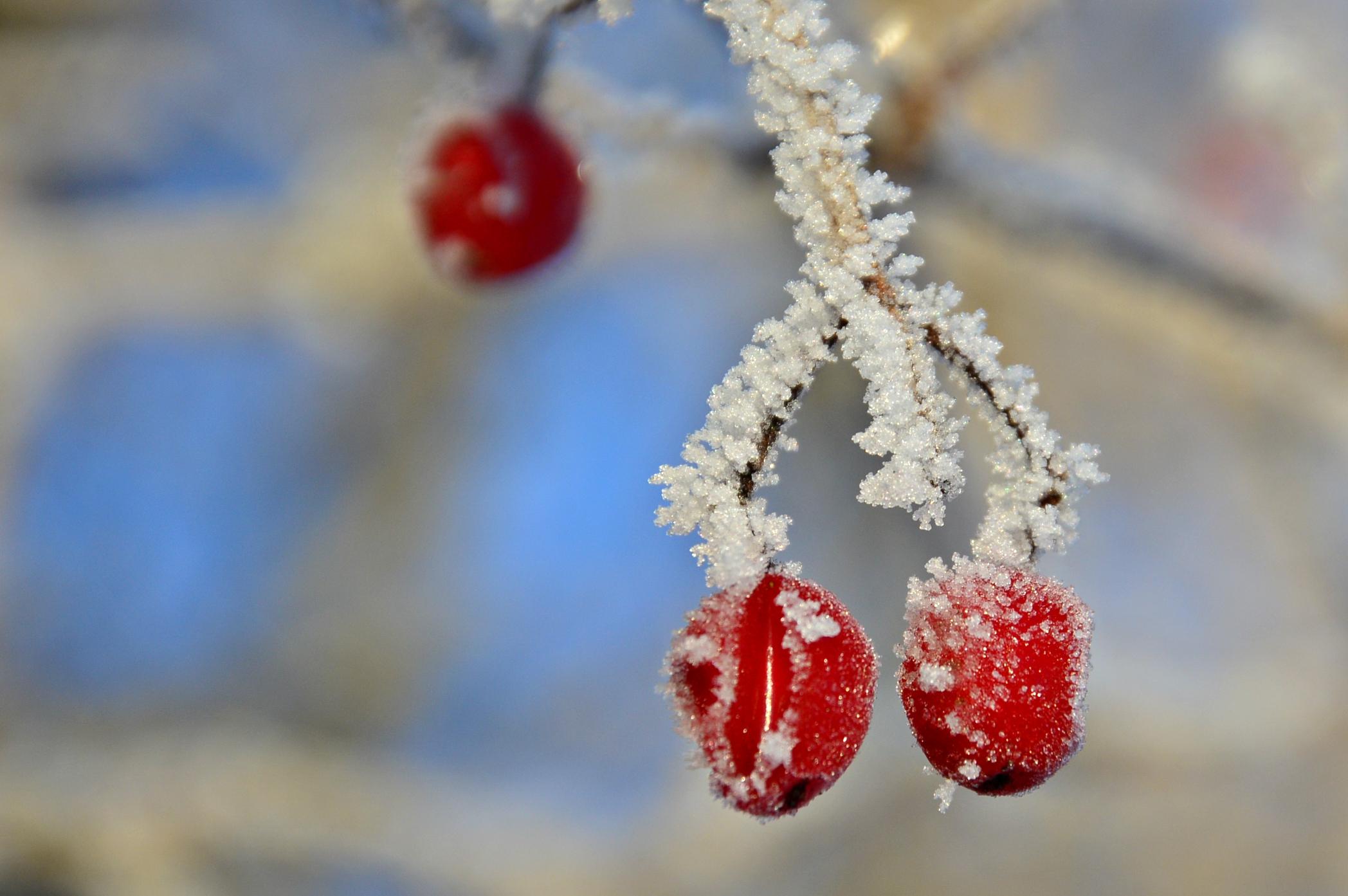 M0115_Frostfrüchte.jpg