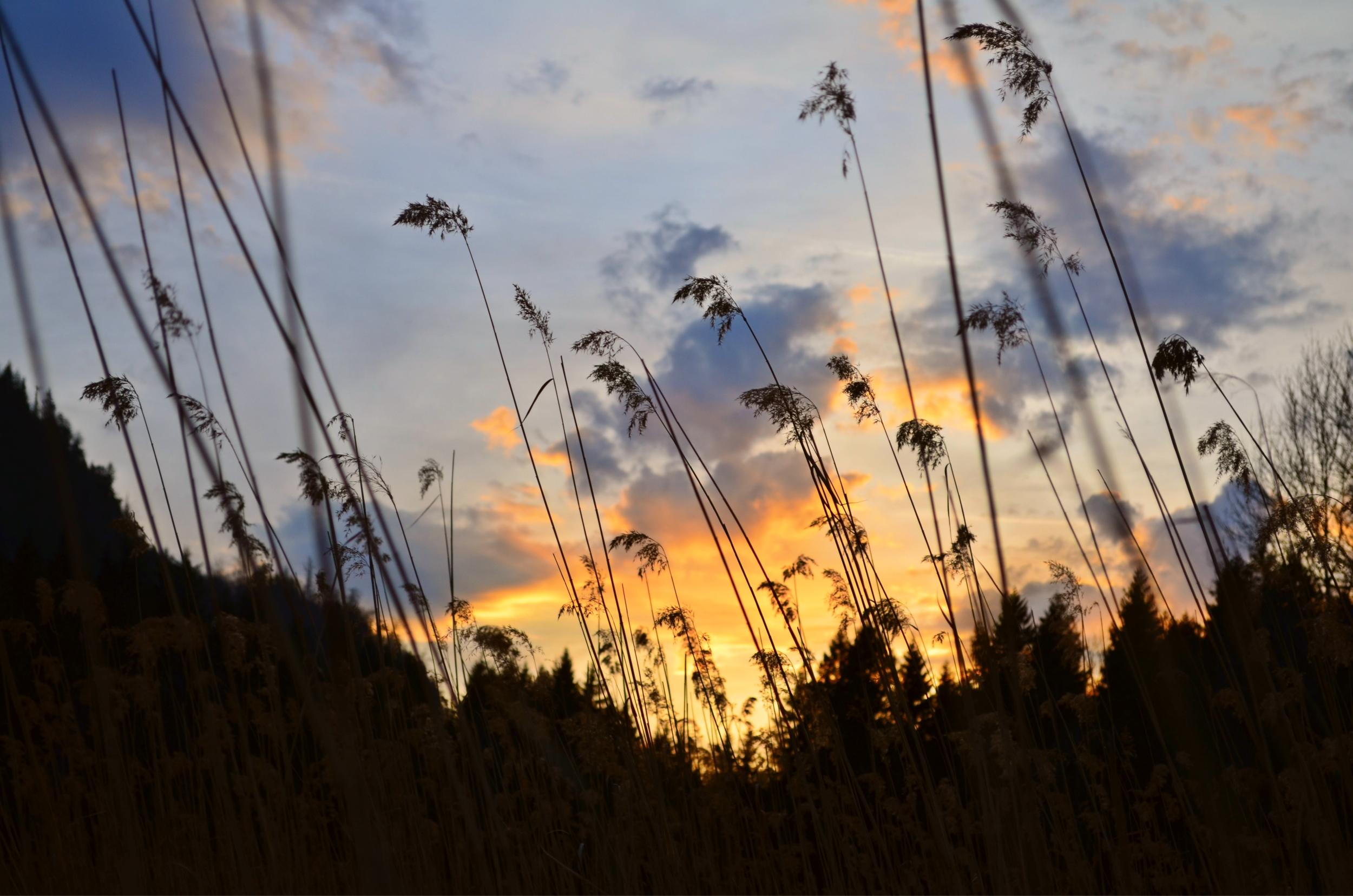 H0025 Abendstimmung am Bannwaldsee