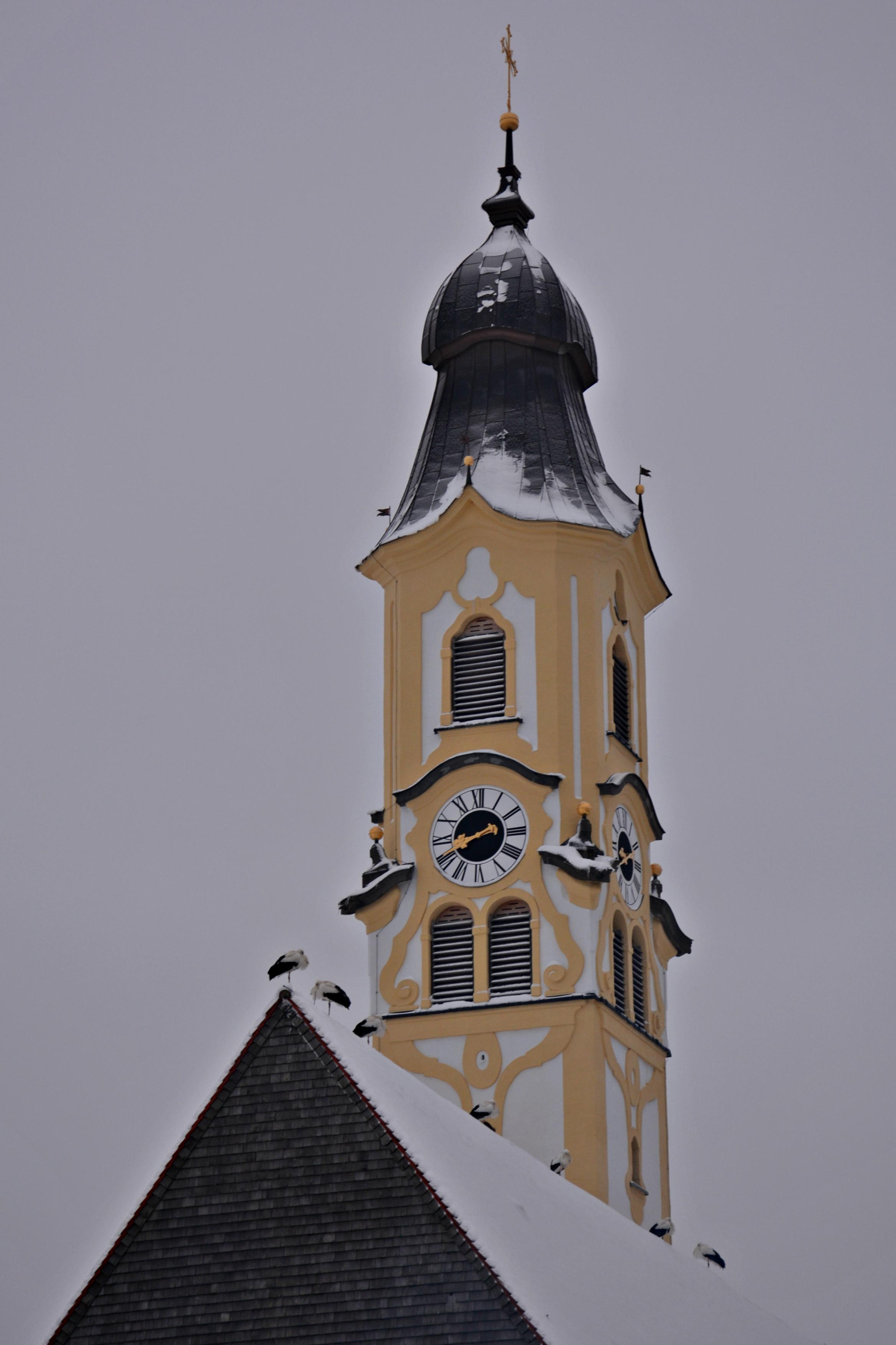 W0354_Störche_auf_St.Nikolaus_Pfronten.jpg