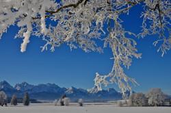 W0158 Frostmorgen am Bannwaldsee.jpg