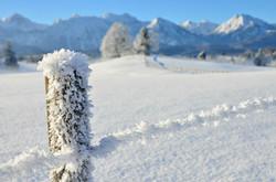 W0183 Winterzaun bei Erkenbollingen Rieden