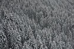 W0205 Winterbäume