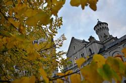 B0073 Herbstlaub Schloss Neuschwanstein.jpg
