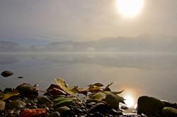 G0209 Herbstlaub am Forggensee im Nebel.jpg