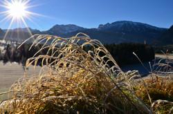 W0160 Frostmorgen Pfronten-Weissbach.jpg