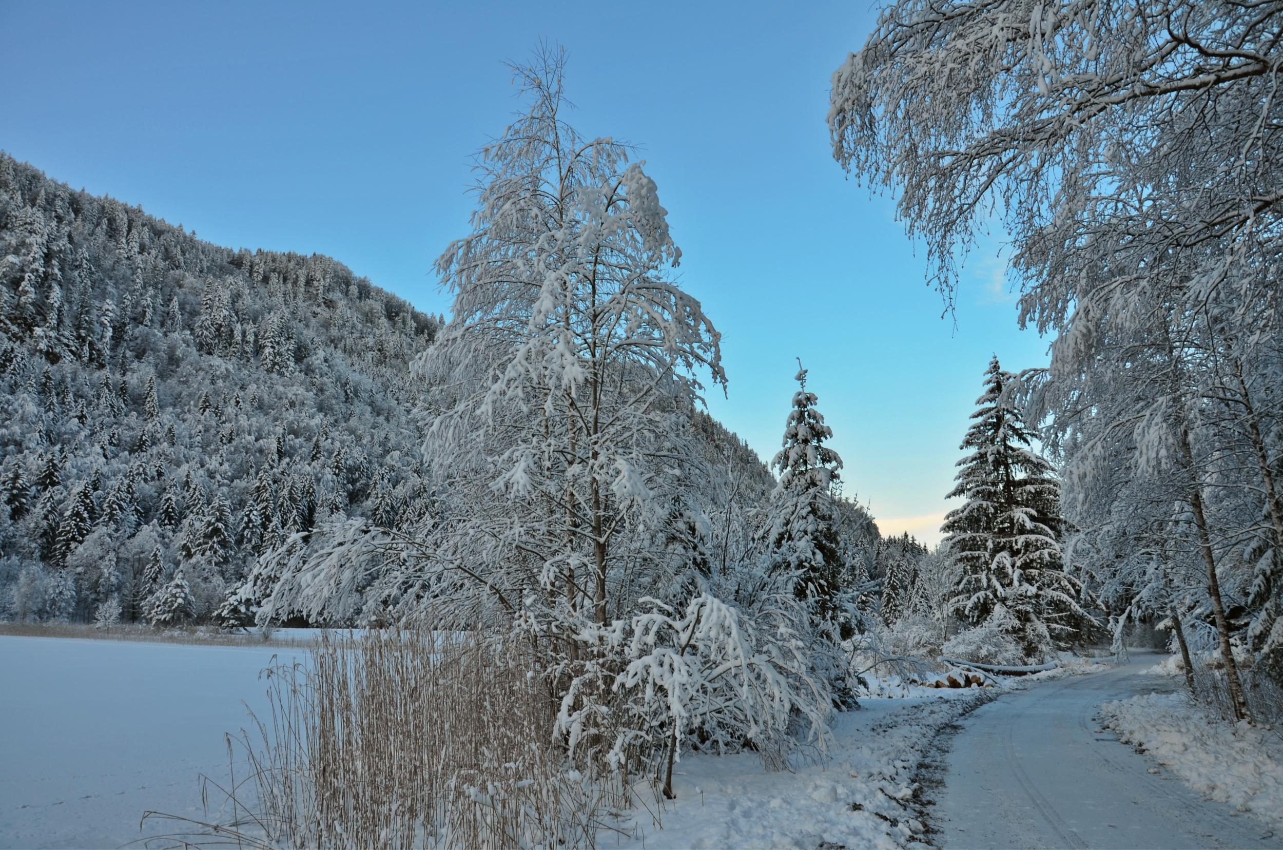 W0127 Winterwald Schwansee.jpg
