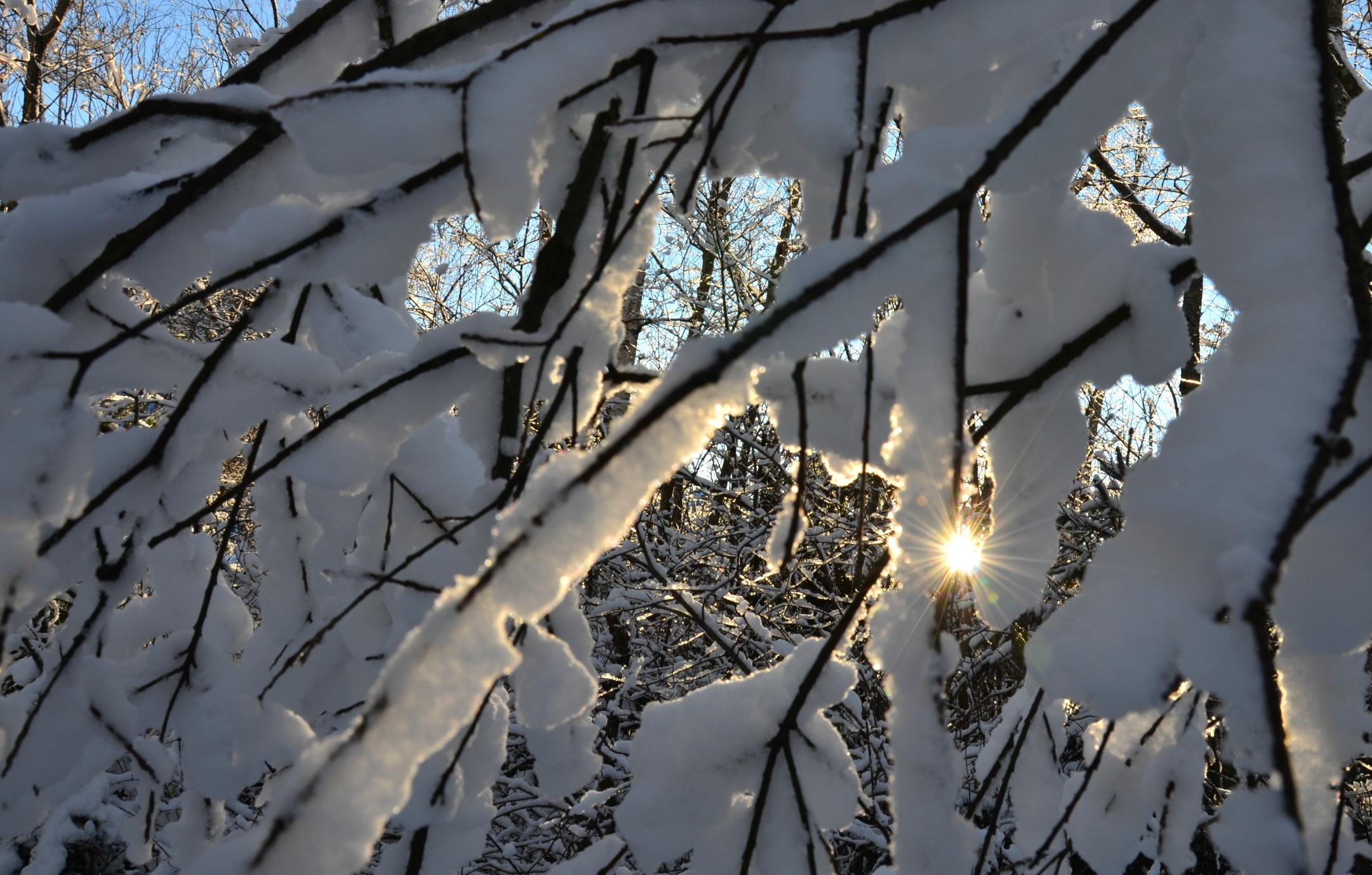 W0082 Schneezweig-Sonne