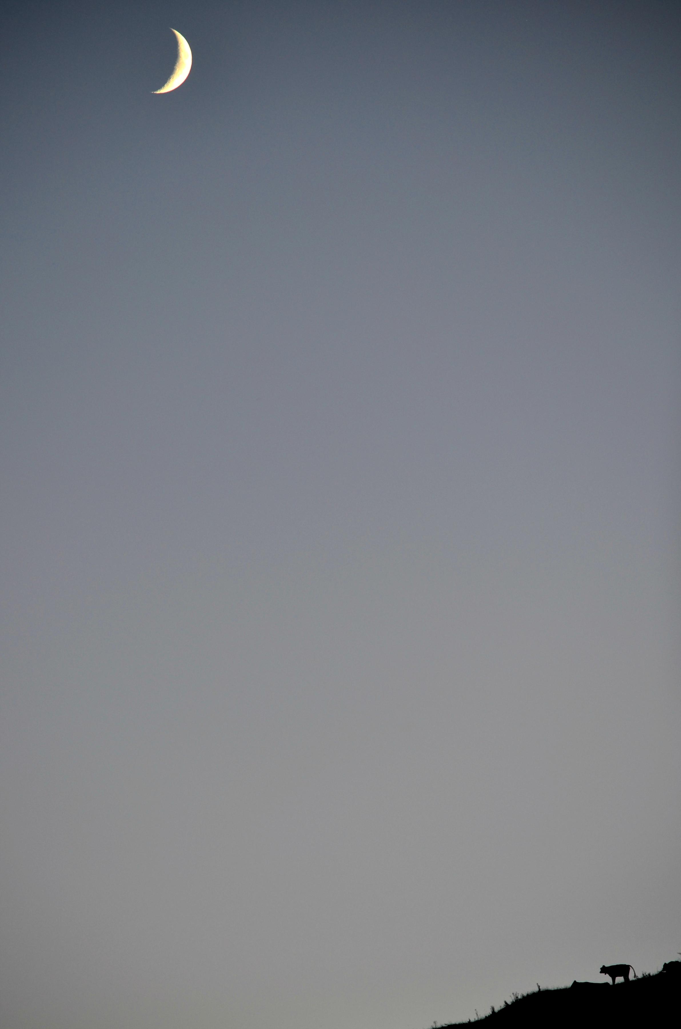 A0169 Mondfreundschaft.jpg