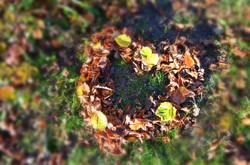 H0012 Herbstliebe