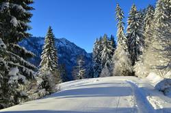 W0066 Spuren im Schnee am Edelsberg.jpg