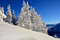 W0300 verschneite Tannen auf dem Breitenberg.jpg