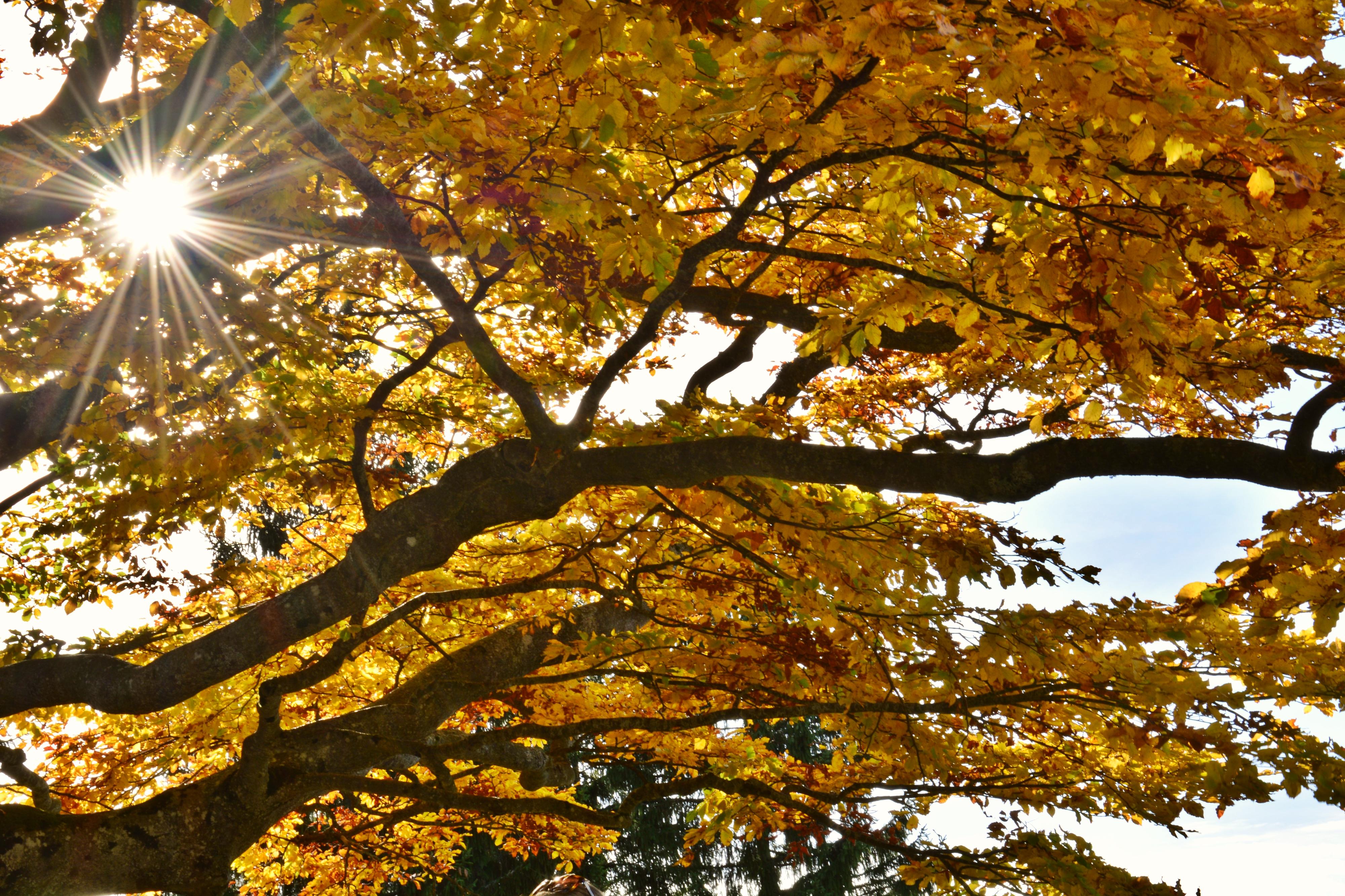 H0166 Goldener Herbst.jpg