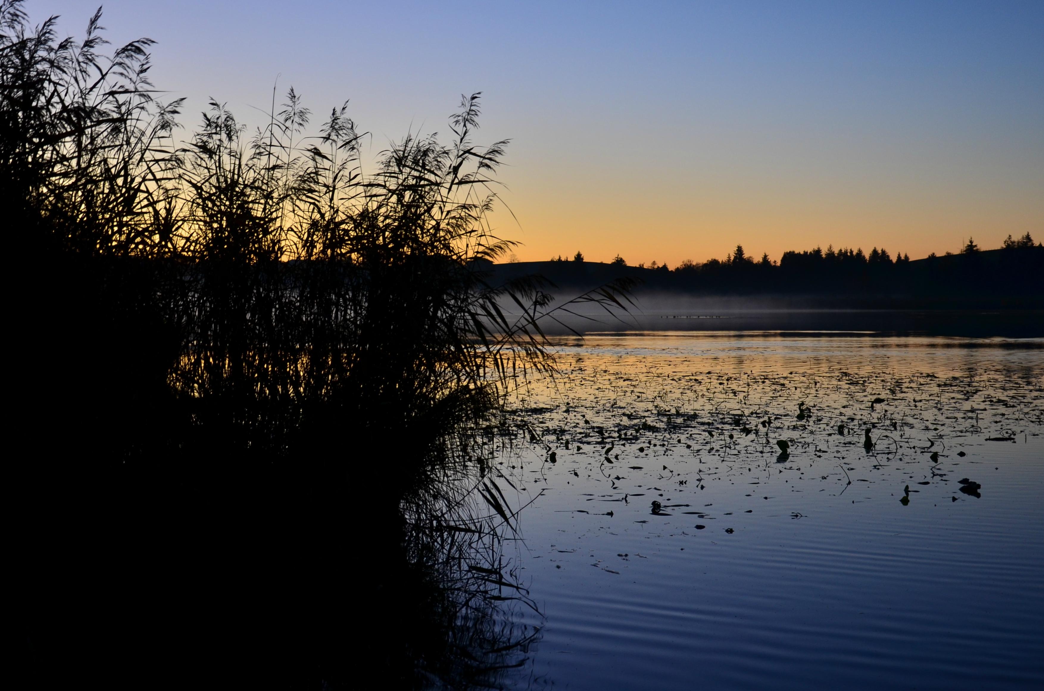 G0232 Nebelschwaden im Sonnenuntergang am Seeger Weiher
