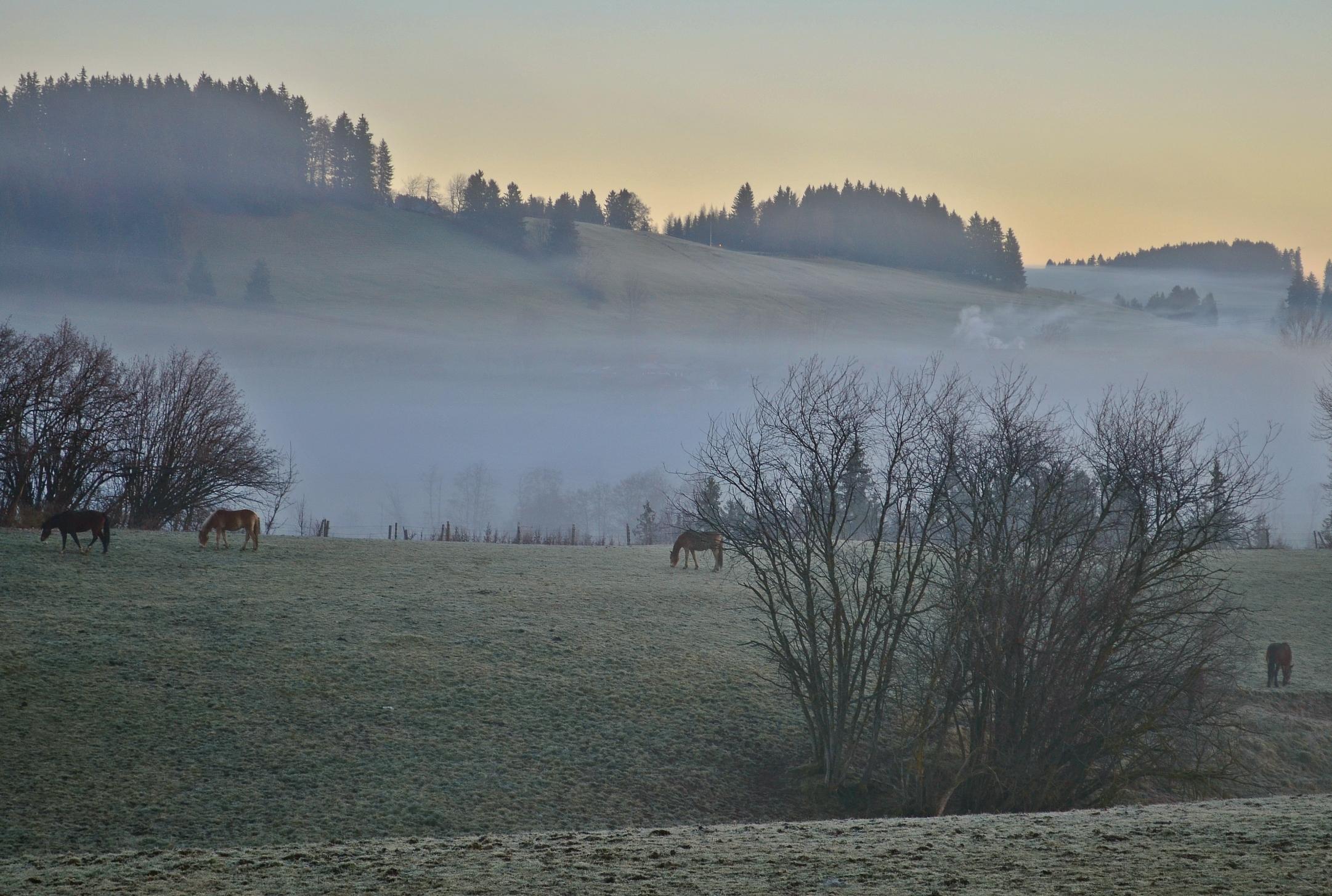 H0057 Pferdekoppel Weissbach Nebelmorgen