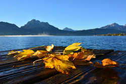 G0391 Herbstlaub am Steg Forggensee.jpg
