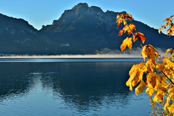 G0388 Herbst am Forggensee.jpg