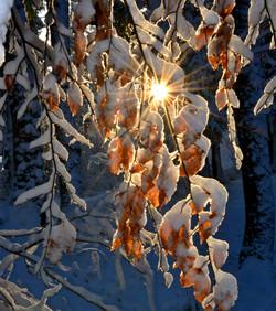 W0327 Laubzweige im Schnee.jpg