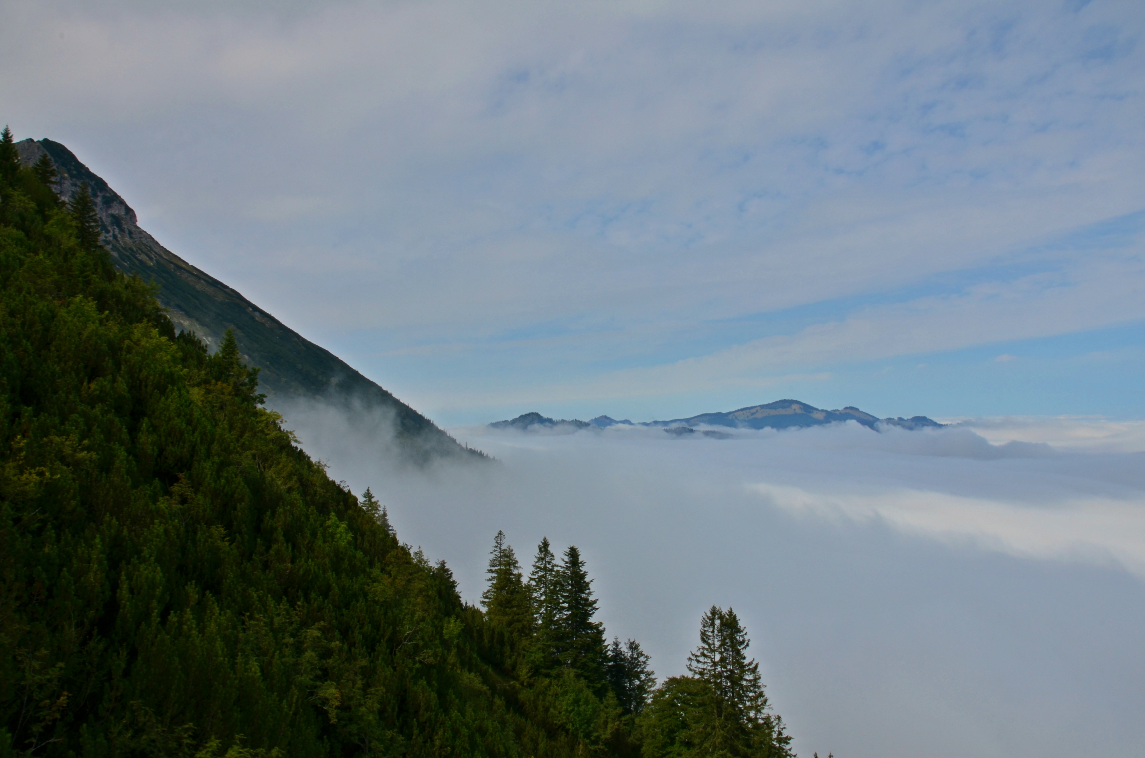A0111 Aus dem Nebel am Breitenberg.jpg