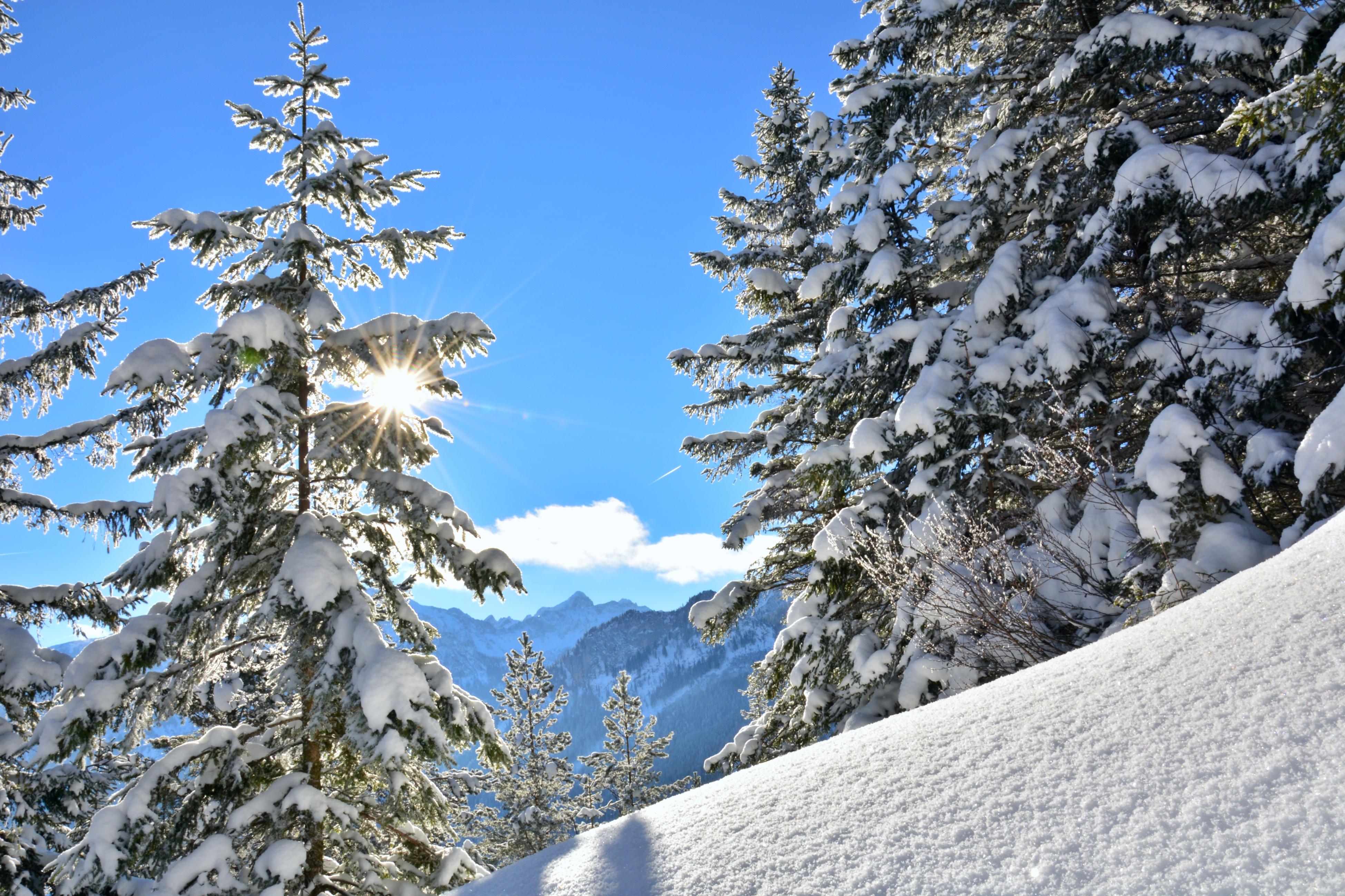 W0277 Winterwald auf dem Falkenstein.jpg