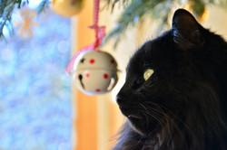 T0026 Weihnachtskater.jpg