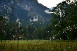 B0061 Regentropfenschimmer unterm Schloss Neuschwanstein.jpg