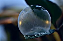M0064 gefrorene Seifenblase auf Blatt