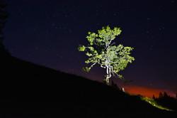 N0009_Sternenhimmel_Bärenmoosbaum.jpg
