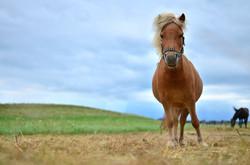 O0049 Bubi Pony