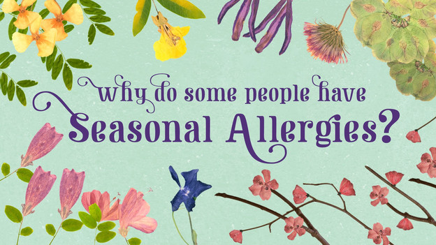 Why Do People Have Seasonal Allergies?