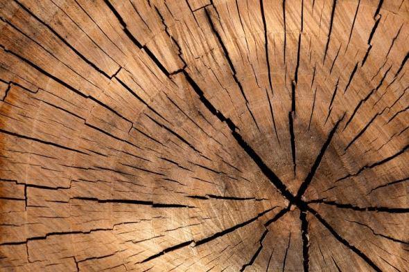 caratteristiche-del-legno