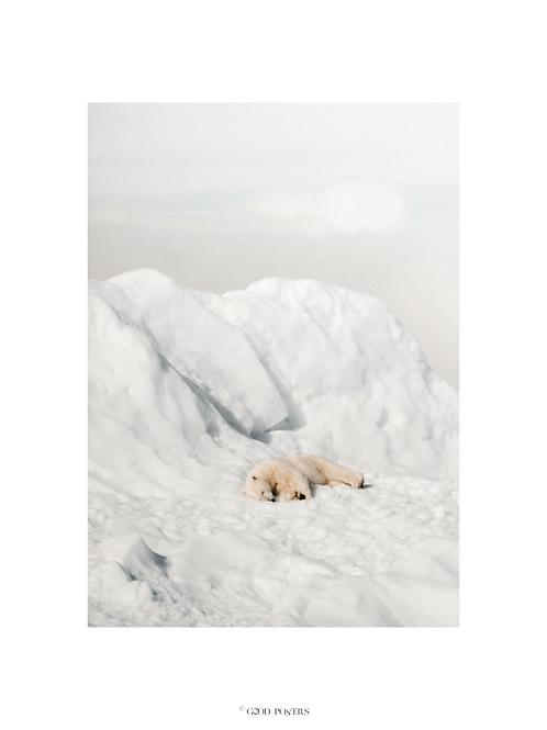 SAVE ME POLAR BEAR © GOOD POSTERS