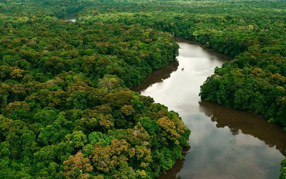 amazonia_bg_large.jfif