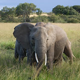 elephants_mara_edited.jpg