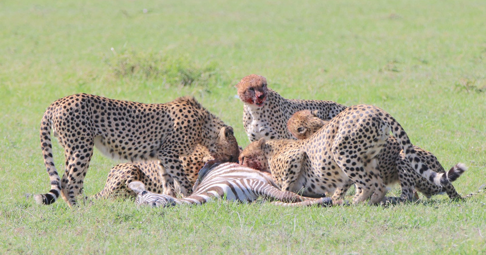 The Tano Bora - Maasai Mara