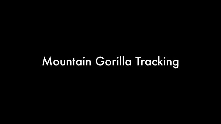 Gorilla Tracking- Bwindi Impenetrable Forest