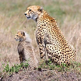 Mama%20toto%20Cheetahs%20cr%20FB_edited.