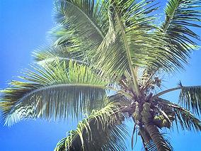 palmen.jpeg