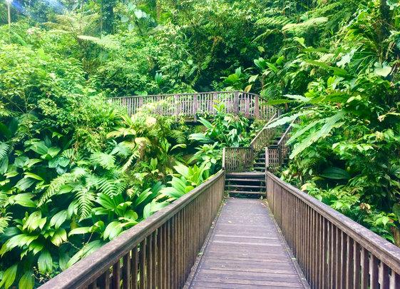 Regenwald Basse-Terre