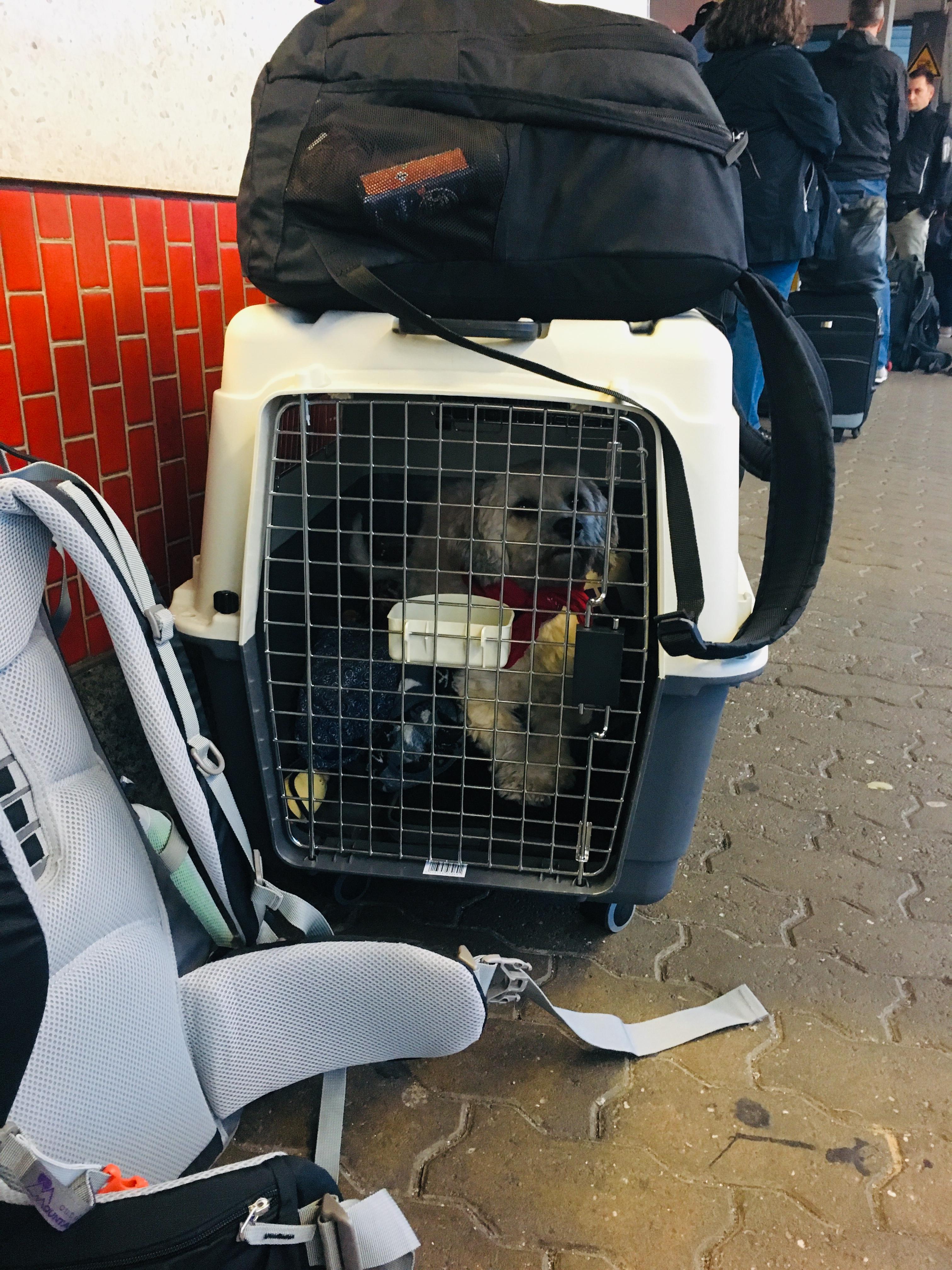 Émigrer avec le chien