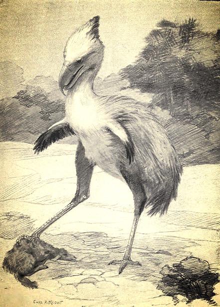 le Phorusrhacos : y'a comme une sacrée ressemblance, non ?