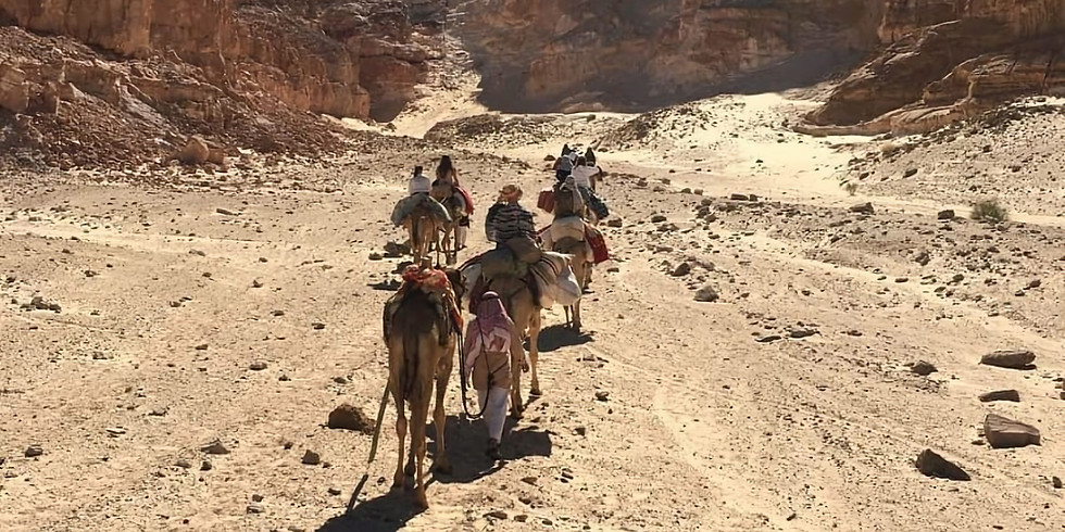 Sinaï desert & Santa Catharina (Mount Moses)