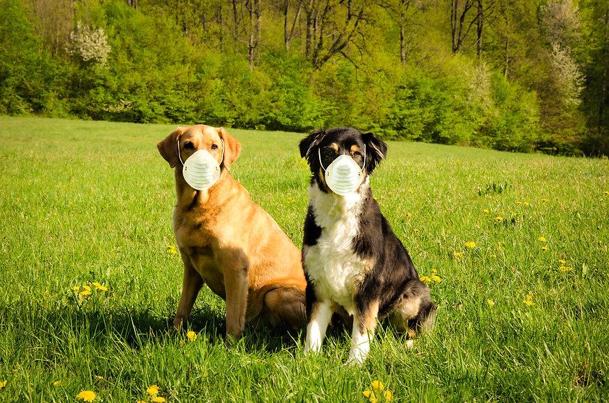 dogs-5576471.jpg
