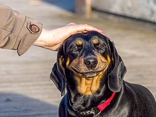 cute puppy Happy dog. smiling cute puppy