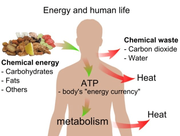 A photo of energy and human life diagram.