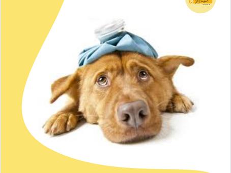 Dicas da Semana - Como cuidar do seu pet no frio?