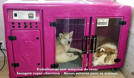 maquina de secagem auau brasil.png