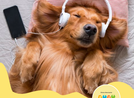 Dicas da Semana - Você sabia que música também desestressa seu PET?